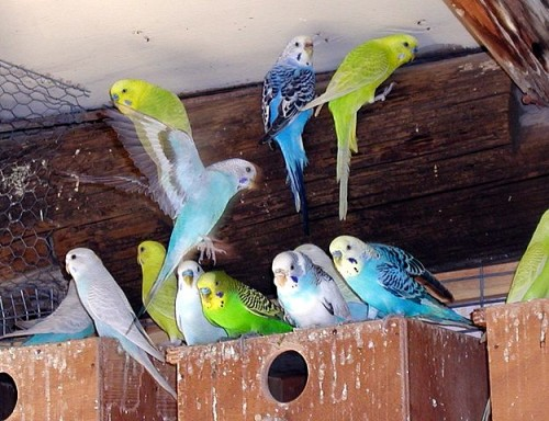 Les Aliments Toxiques Pour Les Oiseaux Blog