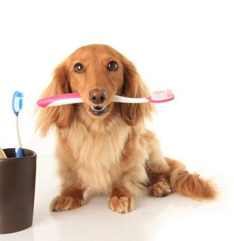 Hygiène de la dentition chez le chien : 6 bons gestes à savoir !