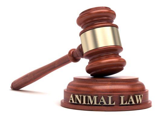 Non à l'abandon des animaux ! Sanctions pénales