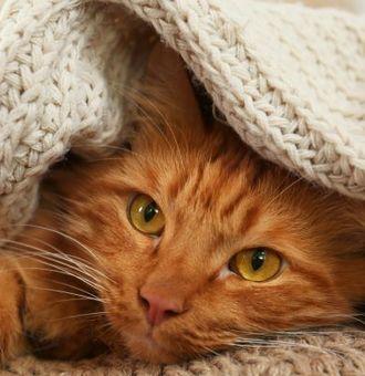 Garder son Chat au chaud : 7 Conseils pour cet hiver