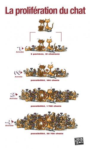 La lutte des glissades de chatte