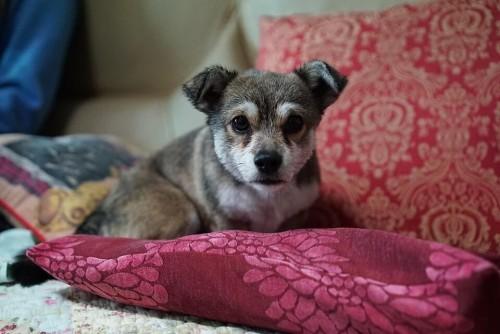 comment choisir la taille de son coussin pour chien blog. Black Bedroom Furniture Sets. Home Design Ideas