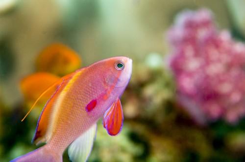 Installer son premier aquarium blog for Quoi mettre aquarium poisson rouge