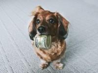 Un Français dépense en moyenne 883 euros par an pour son chien