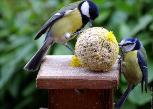 https://www.zoomalia.com/Conseils-pour-bien-nourrir-son-oiseau