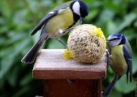 Conseils pour bien nourrir son oiseau