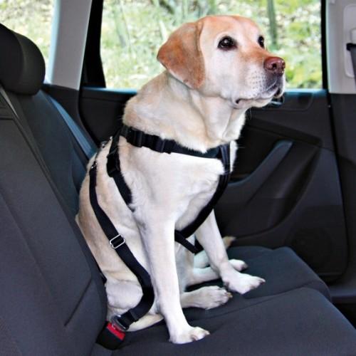 voyager en voiture avec son chien blog. Black Bedroom Furniture Sets. Home Design Ideas