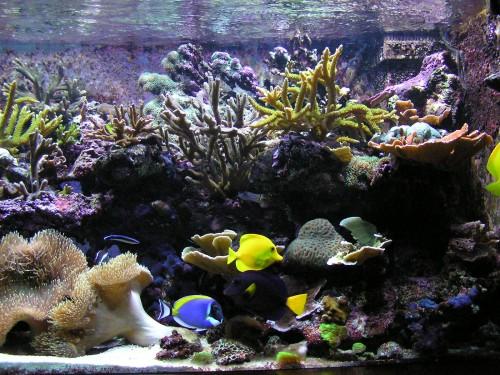 L 39 aquarium d 39 eau de mer blog for Aquarium eau de mer