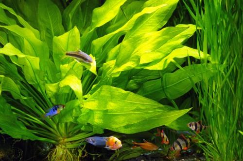 comparatif filtration aquarium