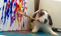 Bini, un lapin qui peint !