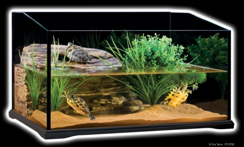 Je veux une tortue d 39 eau blog for Aquarium tortue