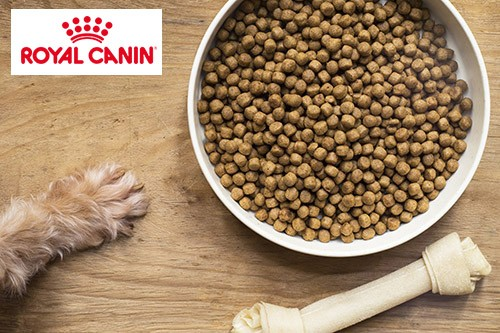 Choisir royal canin alimentation pour chiens et chats