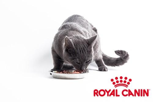 Royal canin pour chat, que choisir ?