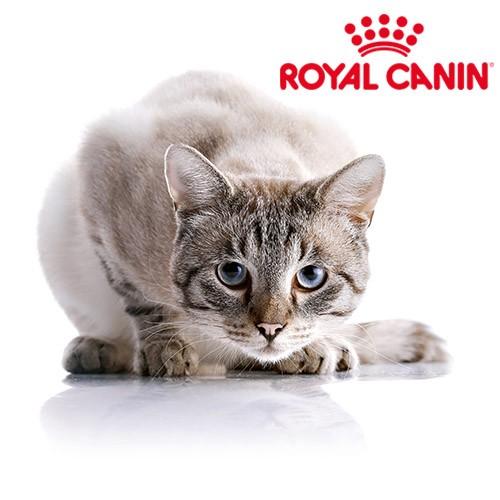 quel royal canin pour mon chat st rilis blog. Black Bedroom Furniture Sets. Home Design Ideas