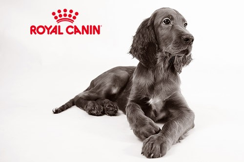 quel royal canin pour chien allergique blog. Black Bedroom Furniture Sets. Home Design Ideas