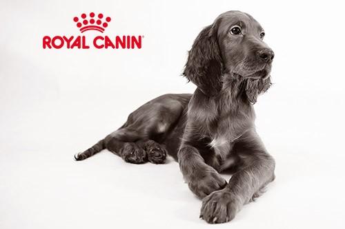 quel royal canin pour chien allergique blog. Black Bedroom Furniture Sets. Home Design Ideas