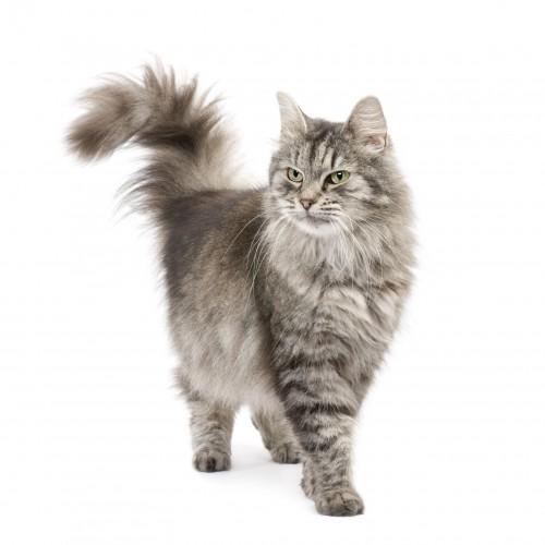 Quelles croquettes pour mon chat âgé ?
