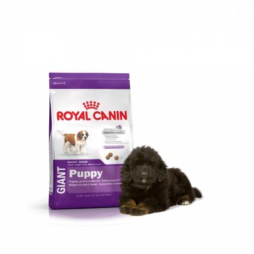 Royal Canin junior, dose pour un chiot en pleine forme
