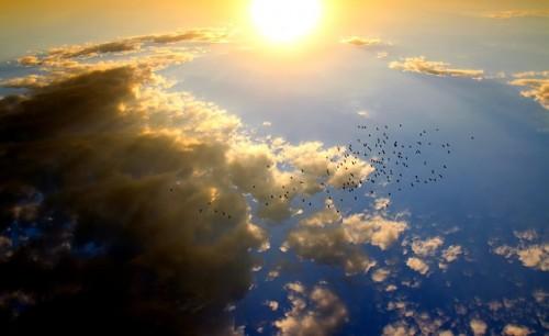 Quels sont les oiseaux du ciel ?