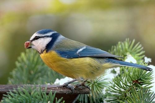 Quand nourrir les oiseaux du ciel ?