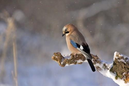 Quand enlever la mangeoire des oiseaux du ciel ?