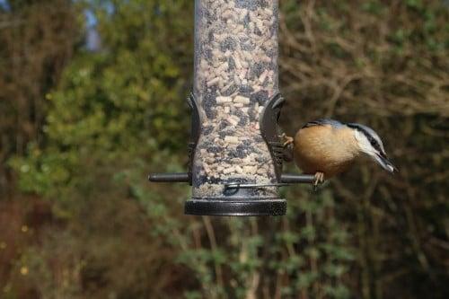 Quelle cage choisir pour son oiseau blog - Mangeoire pour oiseaux du ciel ...