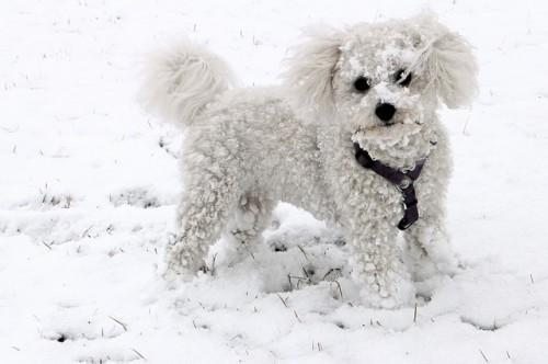 Partir au sports d'hiver avec son chien & conseils pratiques