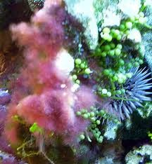 lutter contre les algues de aquarium
