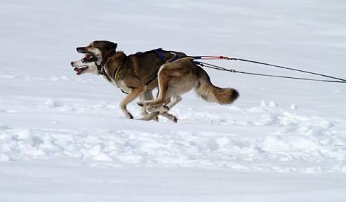 Qu'est ce que le ski joering ?