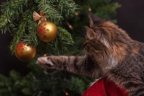 Comment éloigner le chat du sapin de noël ?