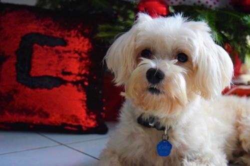 Noël : Où faire garder son chien ?