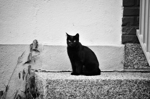 Chat noir errant d'Albertville