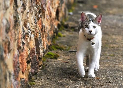 Chat qui marche sur la pointe des pattes