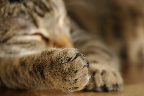 Chat qui régule la température de son corps