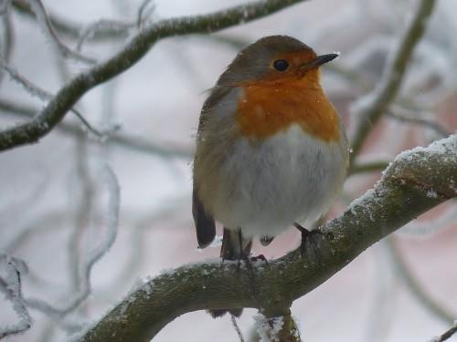 Simple et indispensable : aider les oiseaux du ciel en hiver