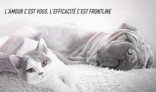 Frontline : l'antiparasitaire de référence pour chien et chat