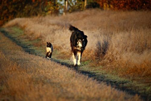 Les colliers antiparasitaires chien et chat