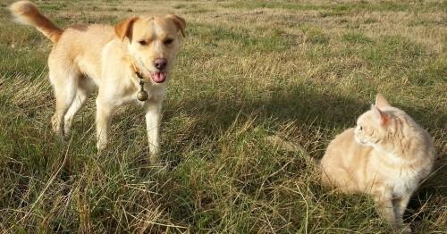 Les traitements antiparasitaires naturels pour le chien et le chat