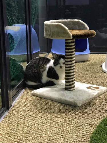 rencontre chats pau