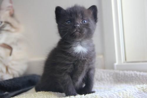 bien pr parer l arriv e de son chaton la maison blog. Black Bedroom Furniture Sets. Home Design Ideas