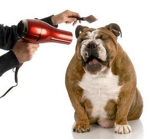 Laver son chien - Blog