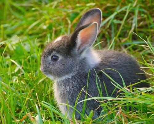 Faire plaisir son lapin gr ce un enclos ext rieur blog for Exterieur lapin