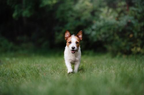 Quel collier anti aboiement pour un petit chien ?
