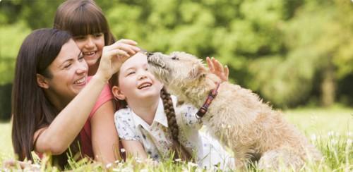 friandises pour les chiens