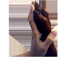 ostéopathie animale