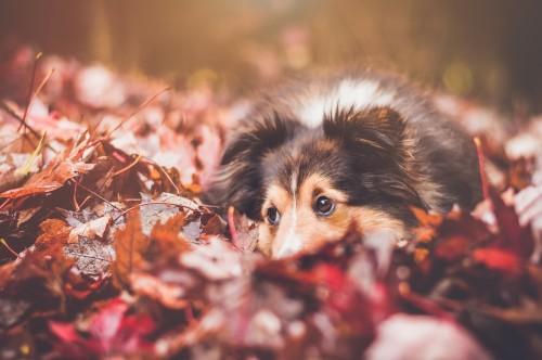 Bien prendre soin de son chien et de son chat en automne