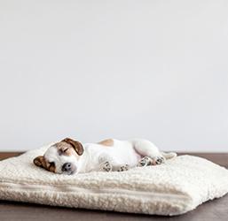 Couchages pour chien