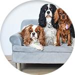 Modèle de canapé pour chien Zolia