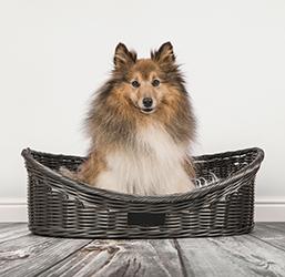 Corbeille pour chien en rotin