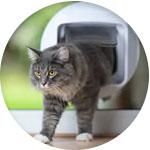 Chat qui traverse une chatière